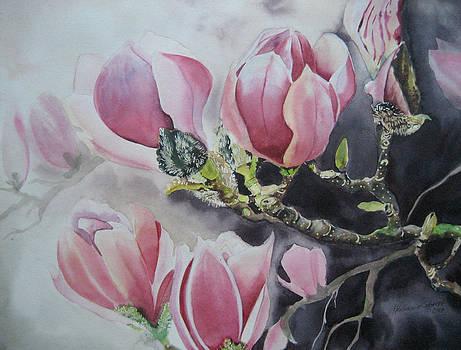 Magnolia by Stephanie Zobrist