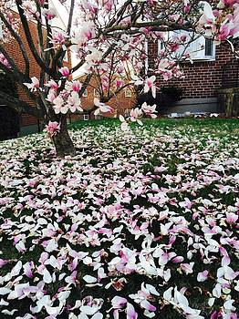 Magnolia by Toni Martsoukos