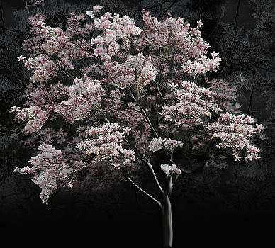 Cindy Boyd - Magnolia Tree