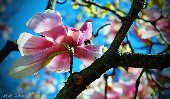 Magnolias by Mikki Cucuzzo