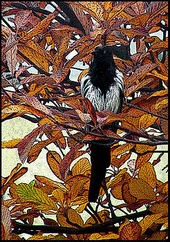 Magpie In Tree by Frank Gaffney