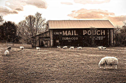 Randall Branham - MAIL POUCH TOBACCO BARN AND SHEEP