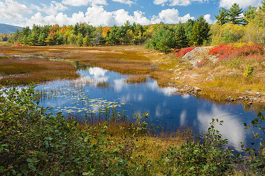 Main Fall Landscape Photo - Acadia Wetlands by Bill Swindaman