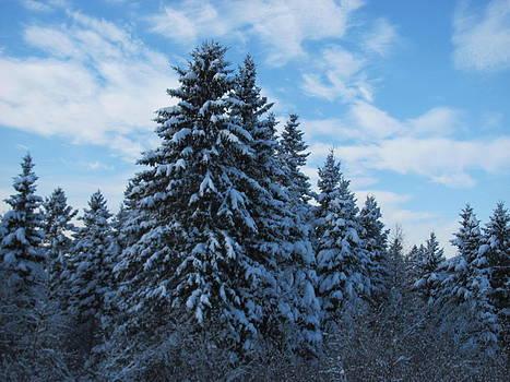 Maine Winter by Sandra Martin
