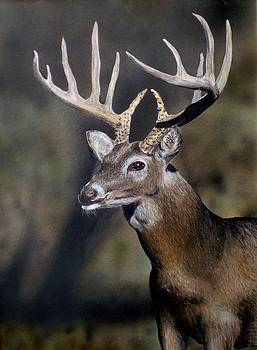 Majestic Buck by Todd Spaur