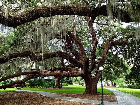 Majestic Oak by Enid Gough