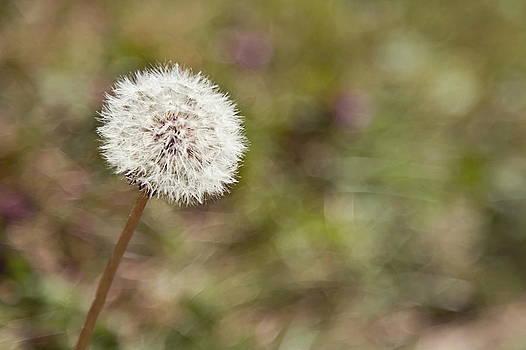 Make a Wish by April Reppucci