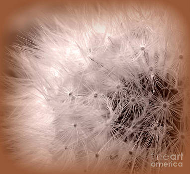 Make a Wish by C Ray  Roth
