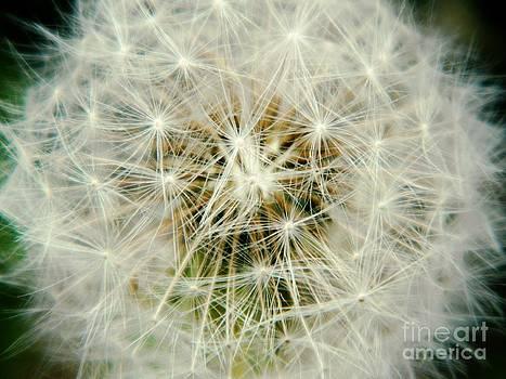 Make a Wish by K L Roberts