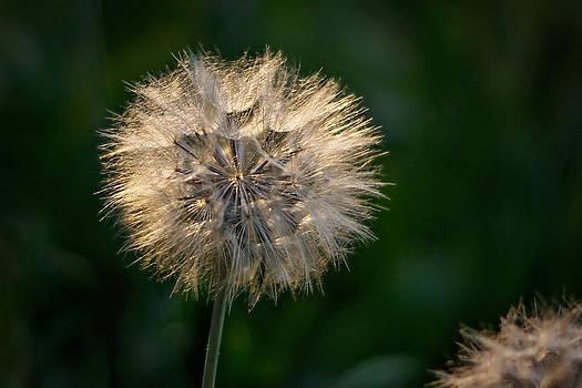 Make a Wish by Linda Storm