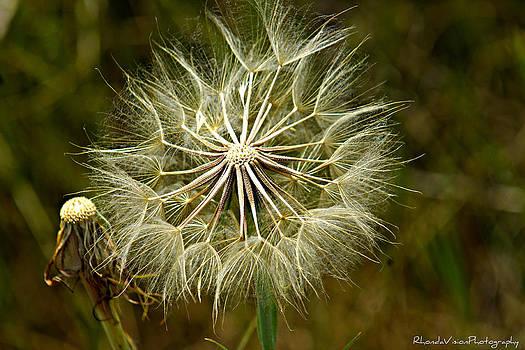Make a Wish by Rhonda DePalma