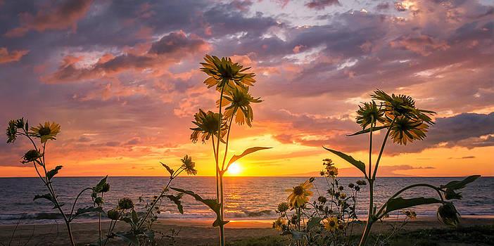 Makena Wildflowers by Hawaii  Fine Art Photography