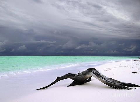 Maldives 02 by Giorgio Darrigo