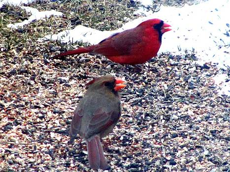 Male and Female Cardinal by Carolyn Mortensen
