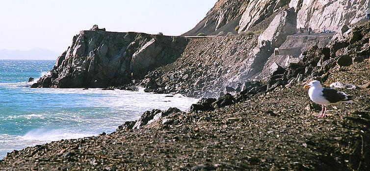 Malibu Seagull by Rebecca West
