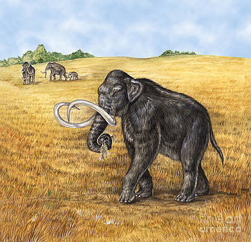 Laurie OKeefe - Mammoth