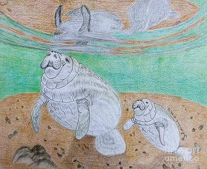 Manatee with calf by Gerald Strine