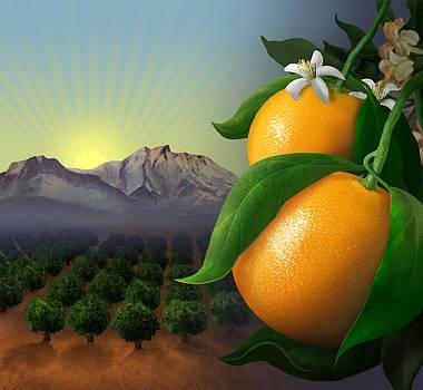 Mandarins by Jessica LeClerc
