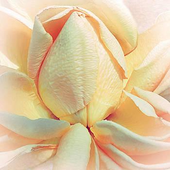 Mango Smoothie by Darlene Kwiatkowski