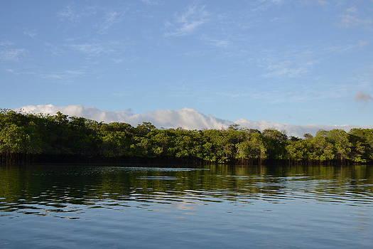 Mangrove Forest by Jennifer Kelly