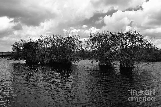 Mangrove Islands by Andres LaBrada