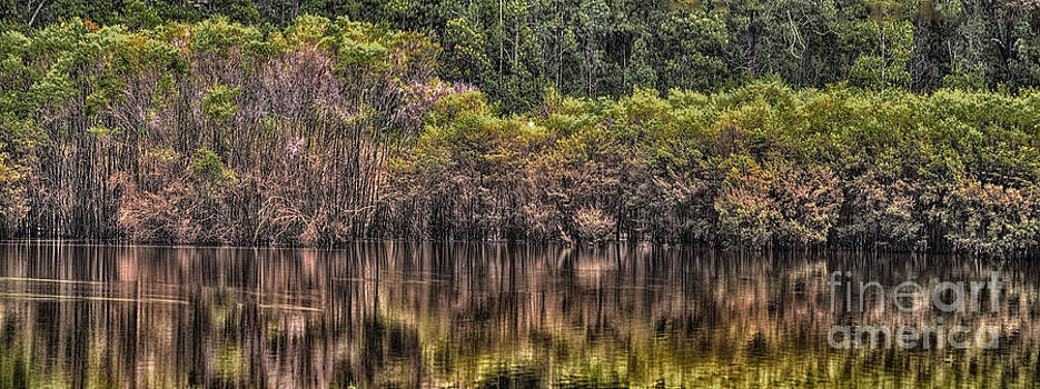 Mangrove Reflection by Philip Johnson