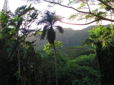 Manoa Valley 1 by Elaine Haakenson