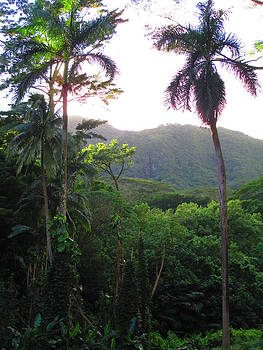 Manoa Valley 2 by Elaine Haakenson