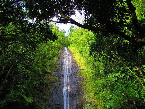Manoa Valley Falls by Elaine Haakenson