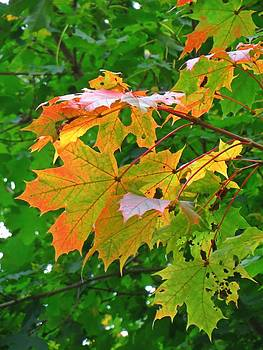 Maple and Green by Anne Sterling