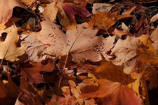 Maple Carpeting by Tingy Wende
