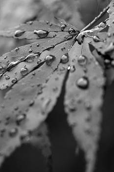 Maple Leaf in Black and White by Bob Noble Photography