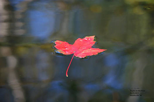 Maple on the River by Steph Maxson