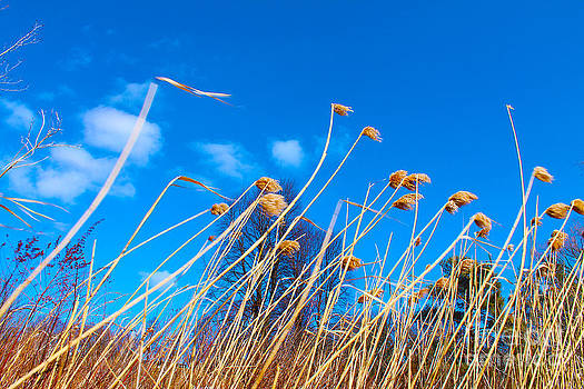 March winds blow through the marsh by Nina Silver