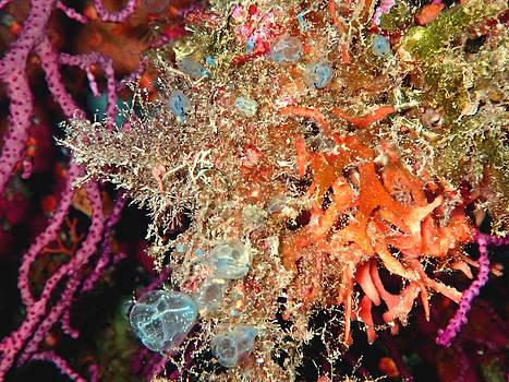 Marine Life by Roberta Sassu
