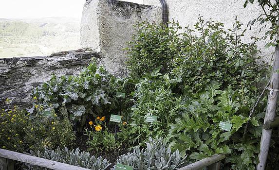 Teresa Mucha - Marksburg Castle Herb Garden 01