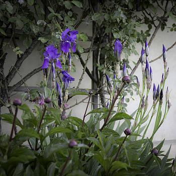 Teresa Mucha - Marksburg Castle Herb Garden 03