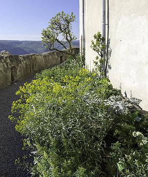 Teresa Mucha - Marksburg Castle Herb Garden 04