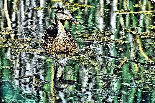 Marsh Hen by Don Mann
