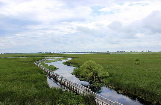 Marsh lands 2  by Rob Merriam