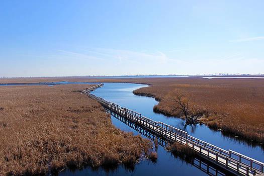 Marsh lands by Rob Merriam