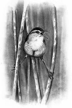 Joyce Geleynse - Marsh Wren In Pencil