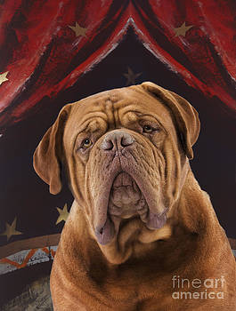 Jean-Michel Labat - Mastiff In A Circus