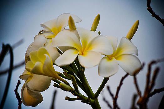 Maui Flower Power by Ken Rutledge