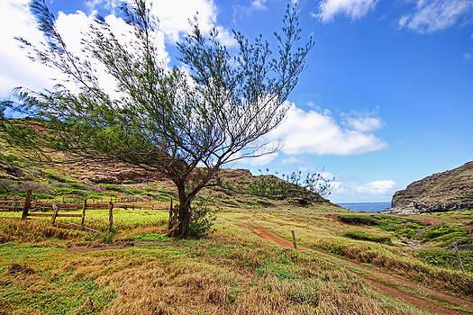 Maui Wind by Rick Lewis