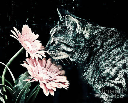 Mavis and the Flower by Lori Frostad