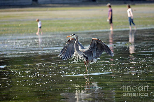 May Day Waders by Gayle Swigart