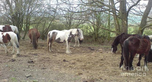 May Hill Ponies 1 by John Williams
