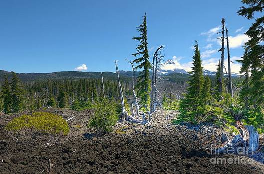 McKenzie Pass Scenic View by John Kelly