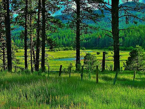 Meadow 8 by Larry Campbell